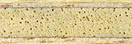 Tibhar Lebesson ütőfa szerkezeti képe